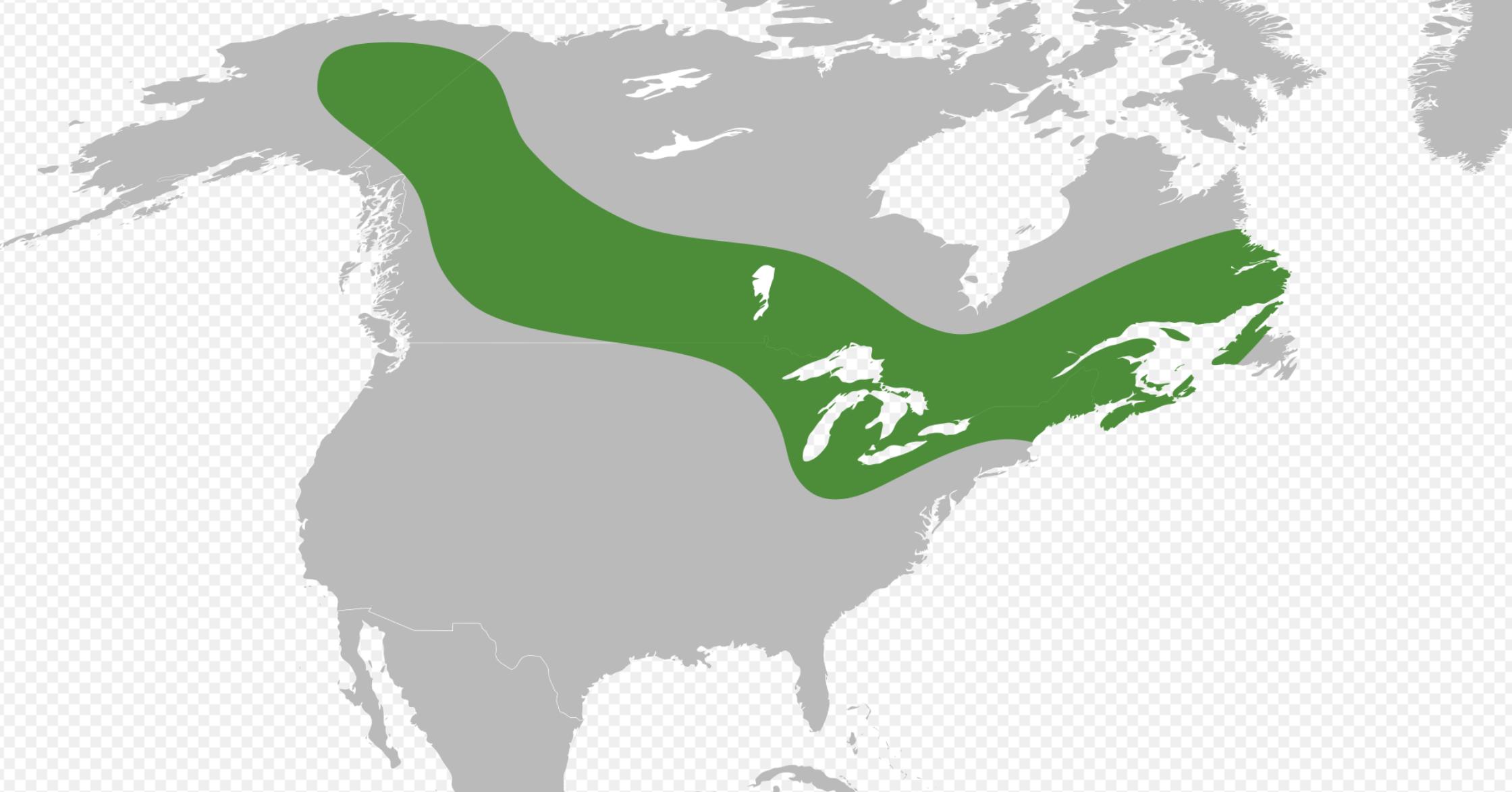 Primula mistassinica. Flora of North America.