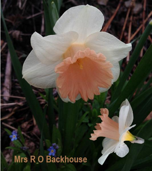 Mrs R O Backhouse
